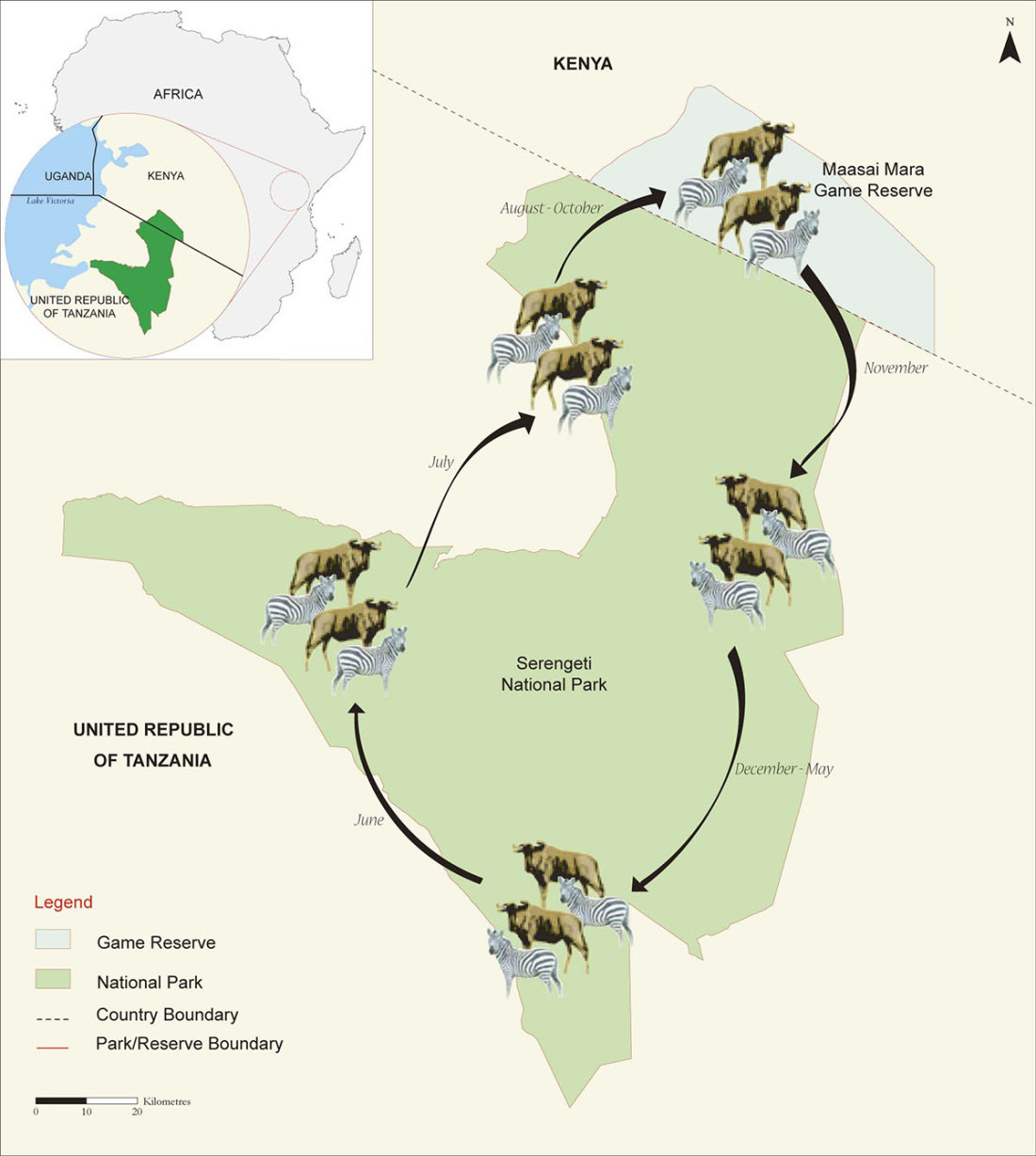 mara-serengeti-migration