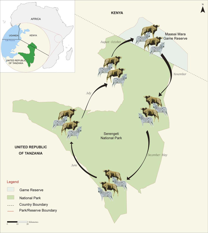 mara-serengeti-migration